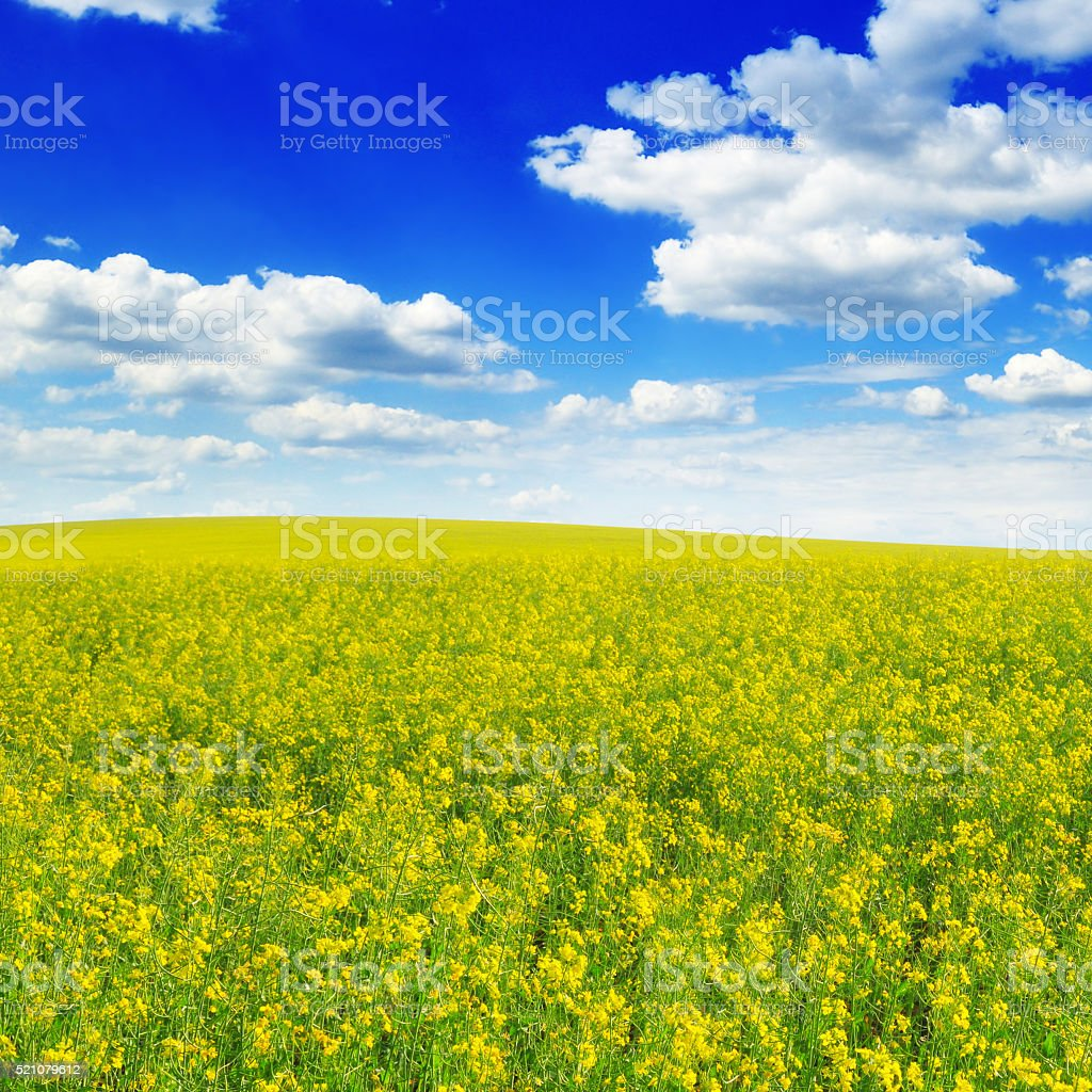 spring field and blue sky stock photo