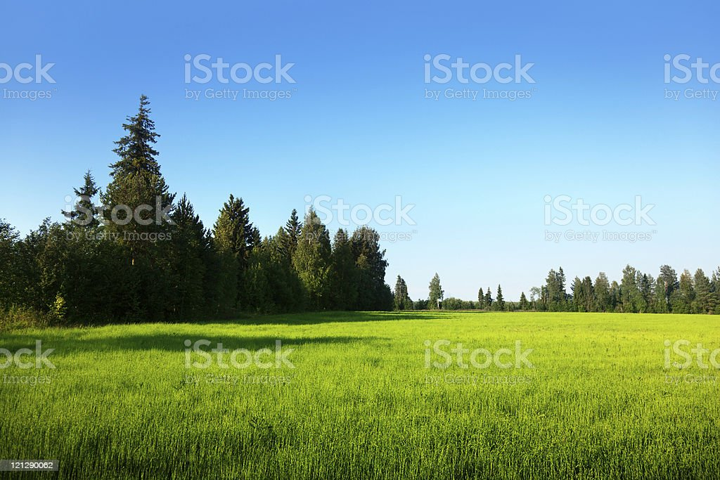 spring field and sunset royalty-free stock photo