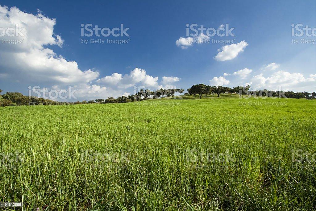 spring field landscape royalty-free stock photo