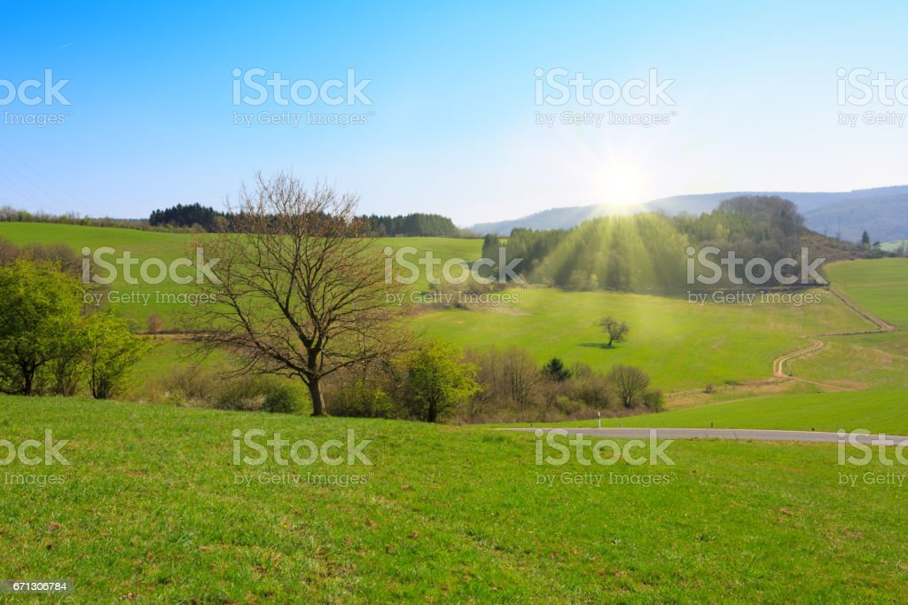 Spring field of grass and sun stock photo