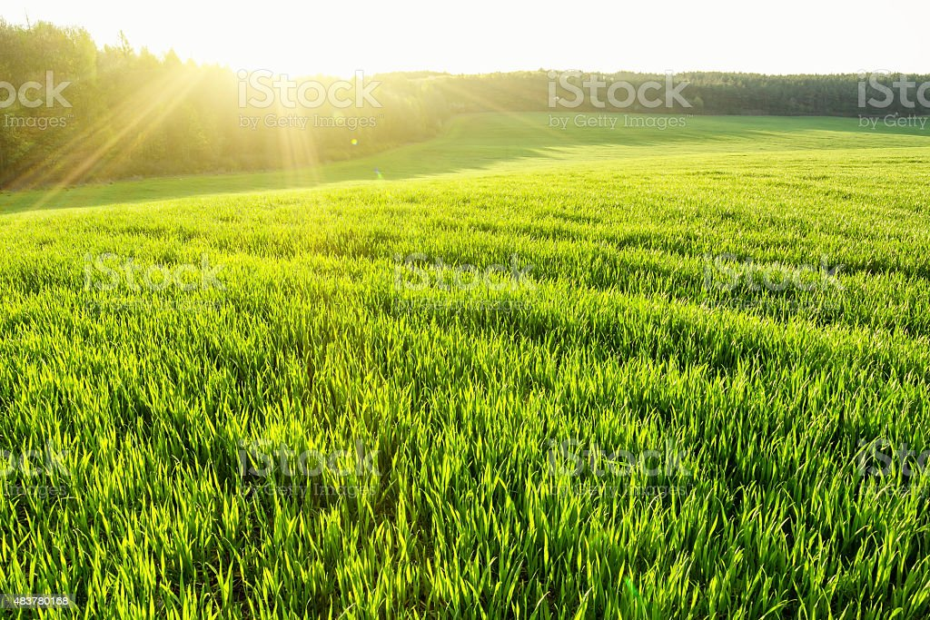Spring field stock photo