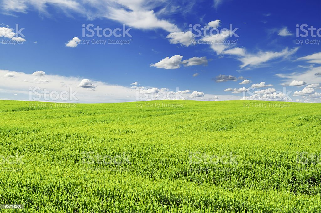 spring field royalty-free stock photo