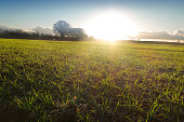 Spring field with sunrise and sky