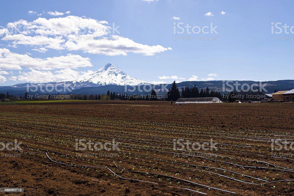 Spring field work stock photo