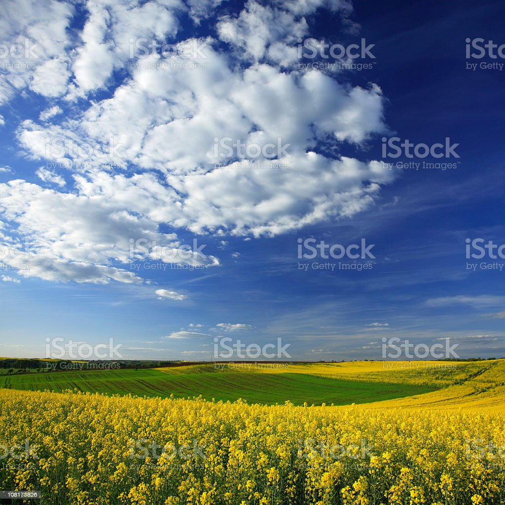 Spring Fields - Late Afternoon royalty-free stock photo