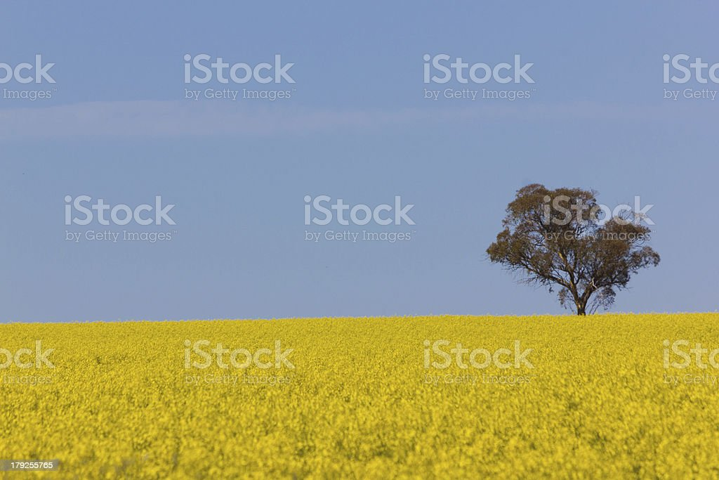 Spring Fields royalty-free stock photo