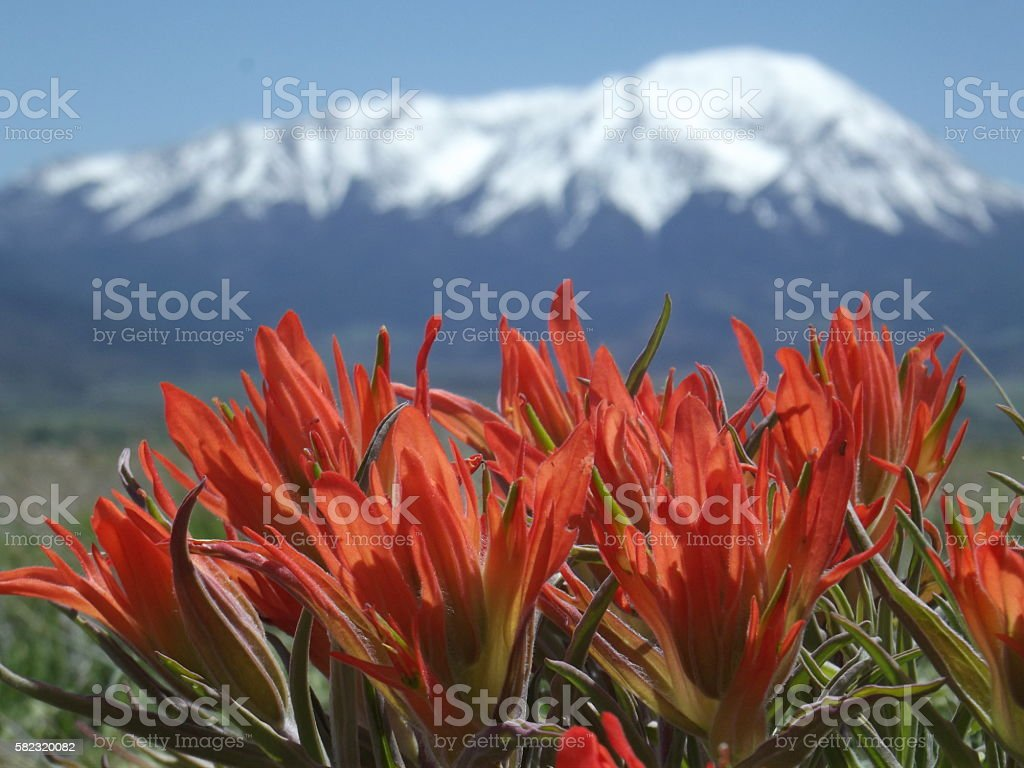 Spring Fire stock photo