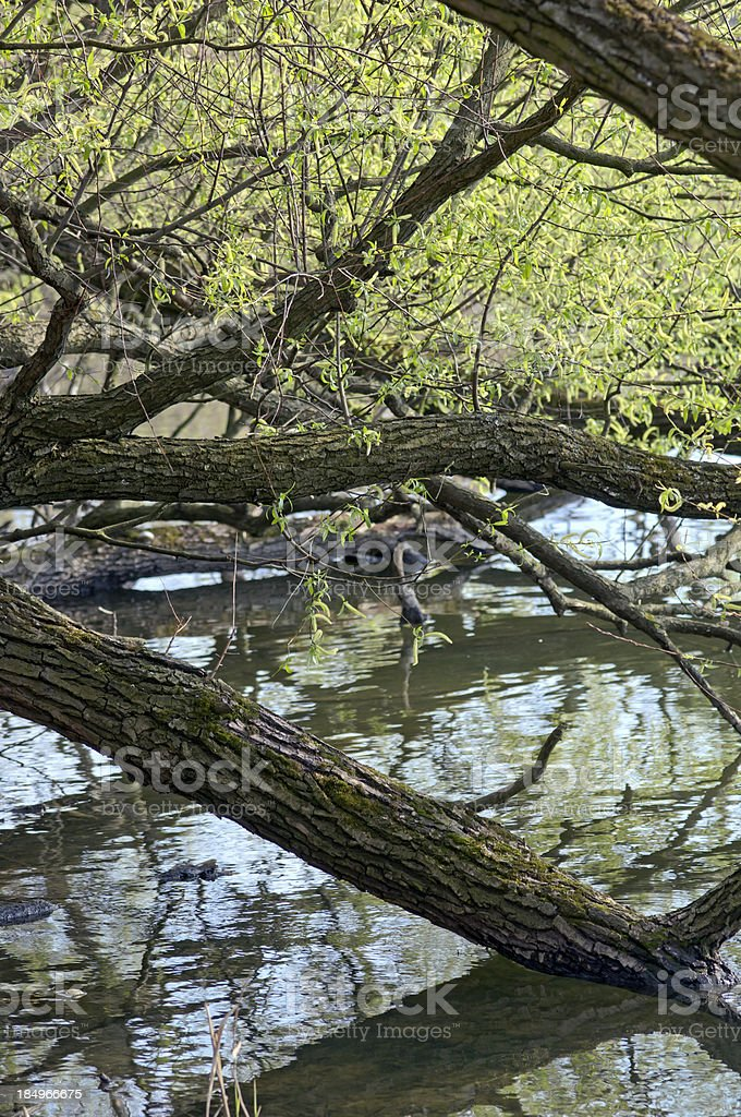 Spring fishpond stock photo