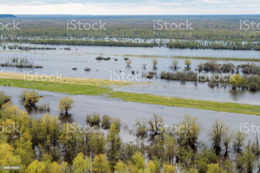 Spring flood on the Siberian river stock photo