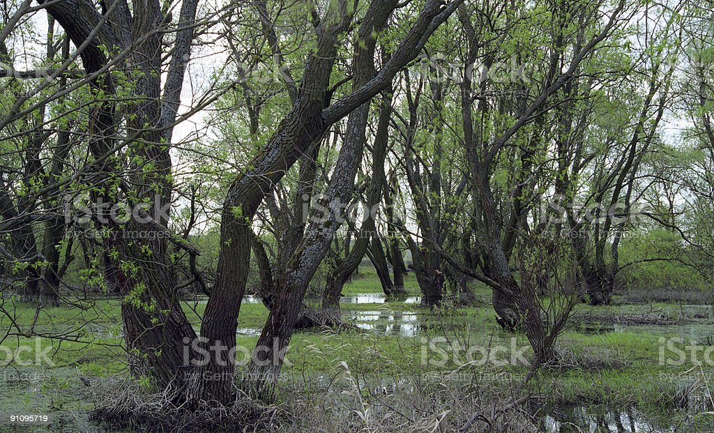 Spring flood waters stock photo