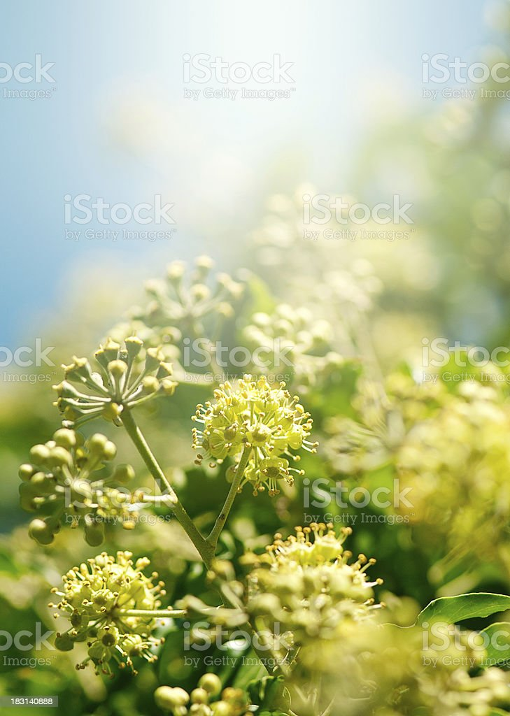Spring floral abstract background stock photo