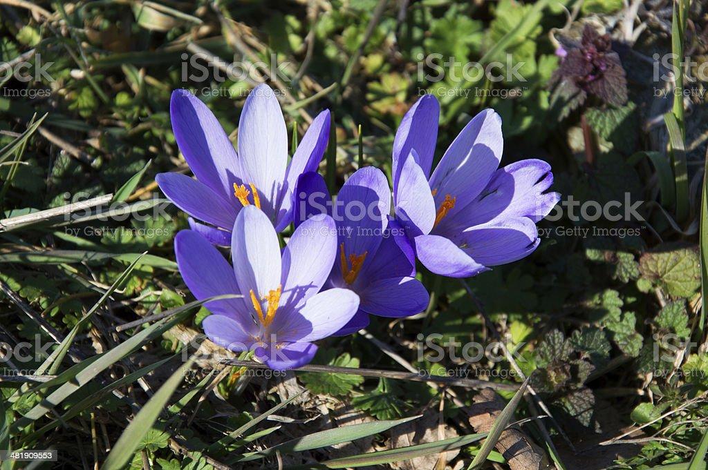 春の flovers ロイヤリティフリーストックフォト
