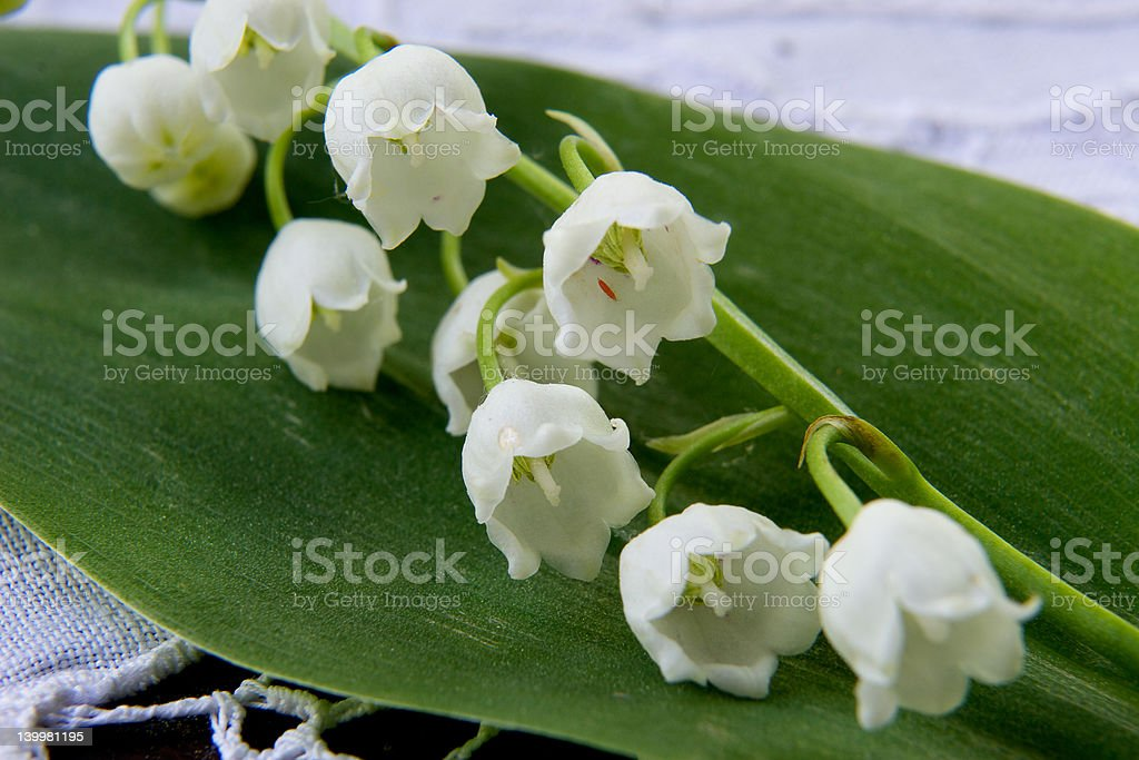 Spring flower a lily of the valley royalty-free stock photo