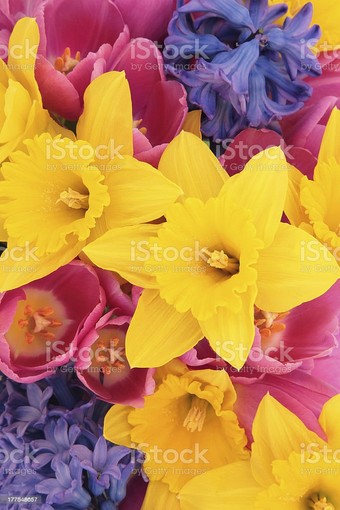 Spring Flower Beauty royalty-free stock photo