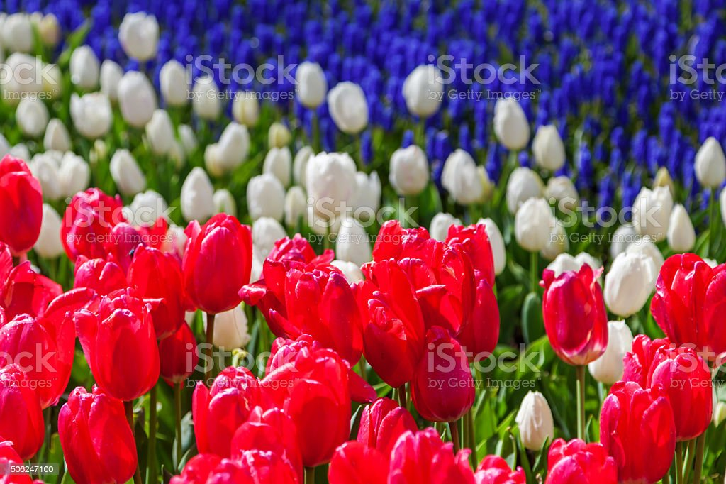 spring flower bed stock photo