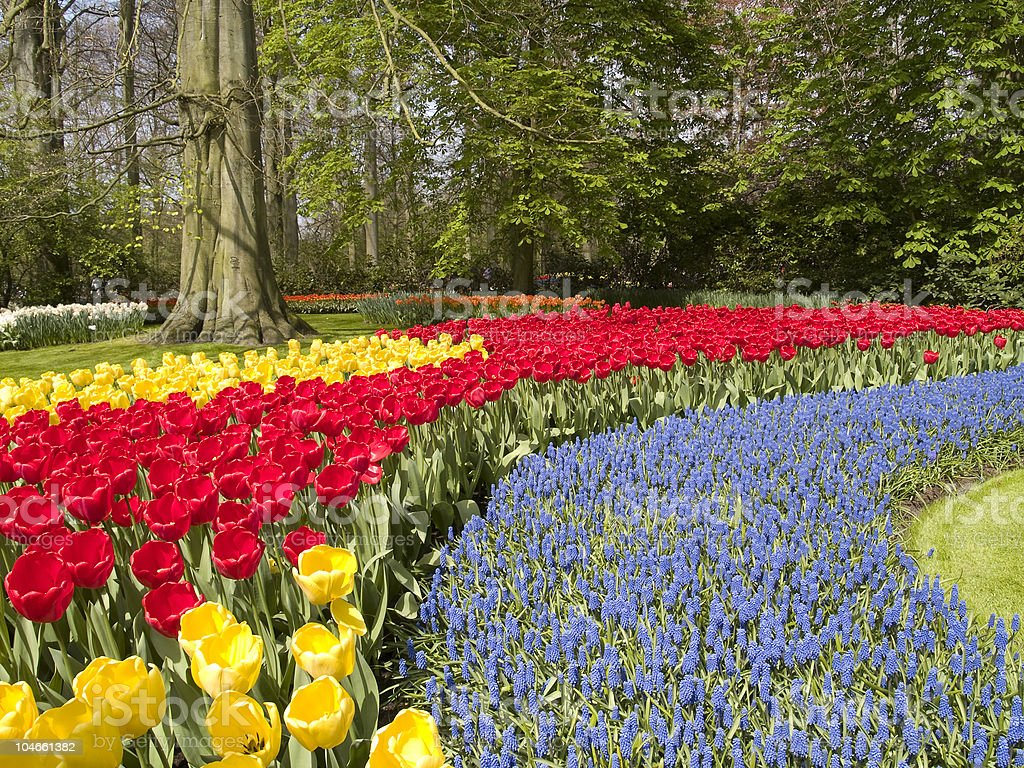 Spring Flower Beds royalty-free stock photo