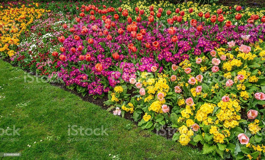 Spring Flower Border stock photo