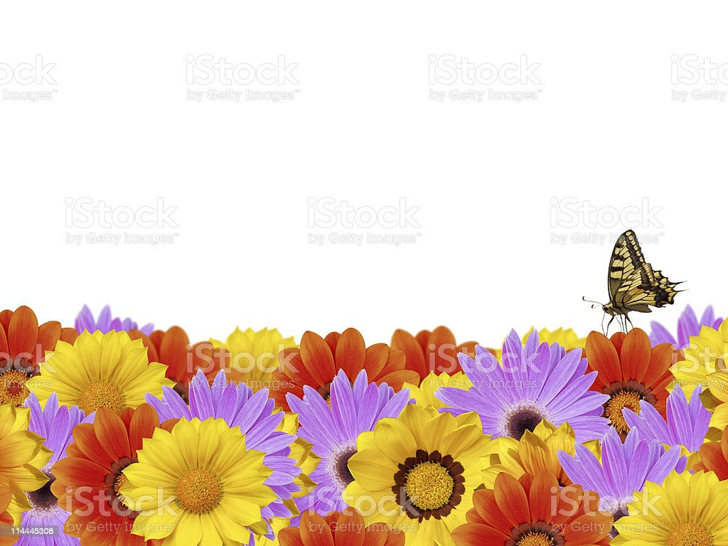 Spring flower border with butterfly XXL royalty-free stock photo