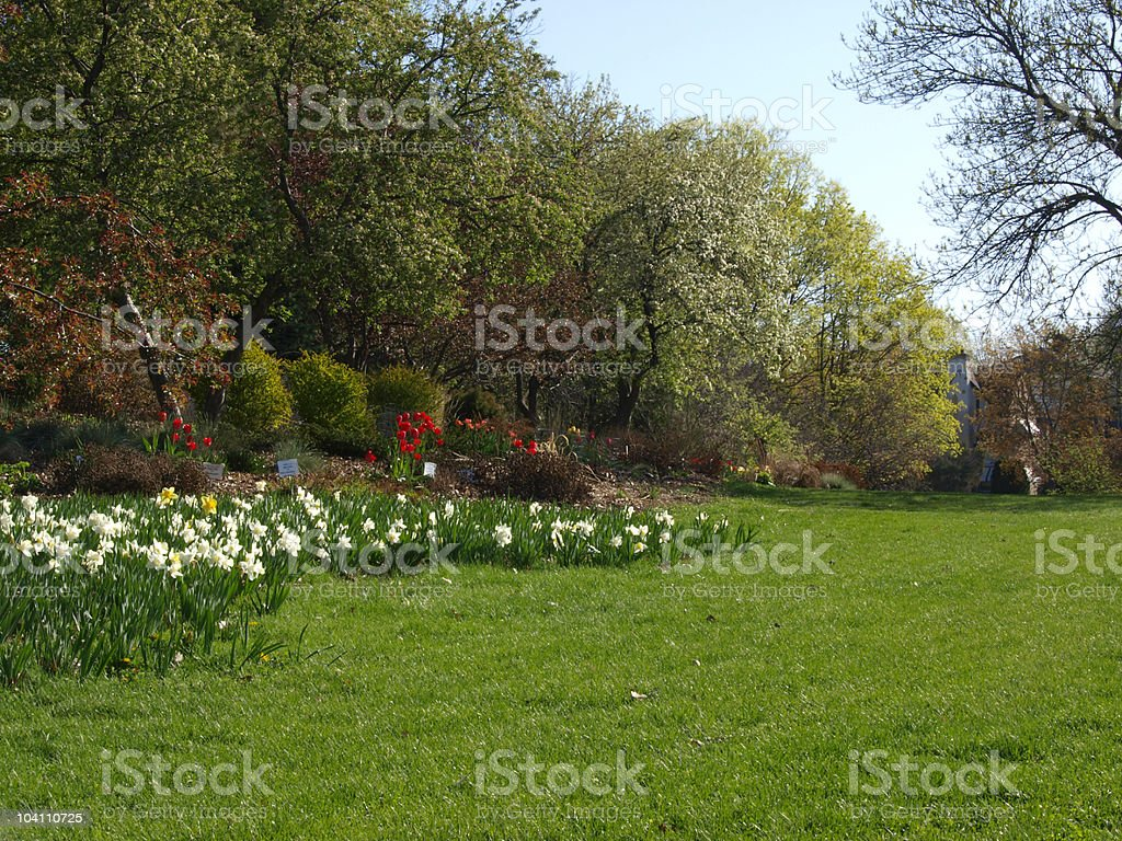 Spring Flower Garden and Landscape royalty-free stock photo