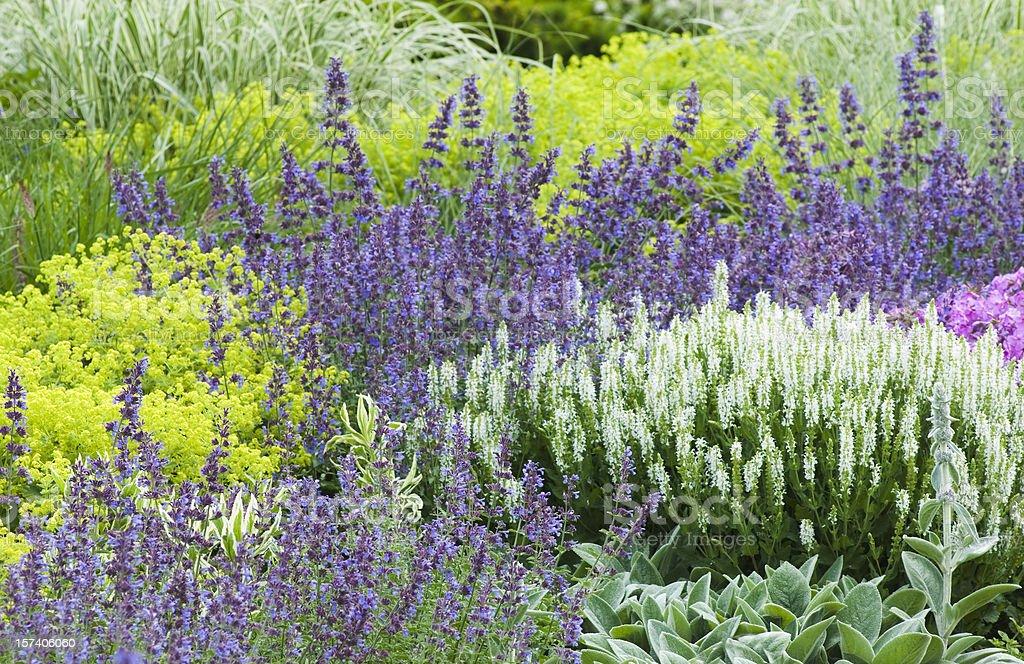 Spring flower garden - III royalty-free stock photo
