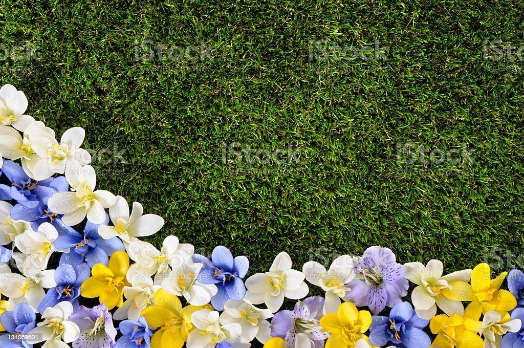 Spring flower garden meeting grassy border royalty-free stock photo