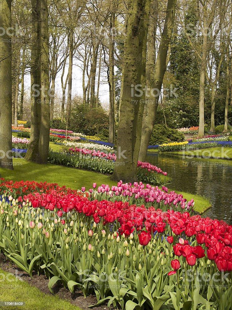 Spring Flower Garden stock photo