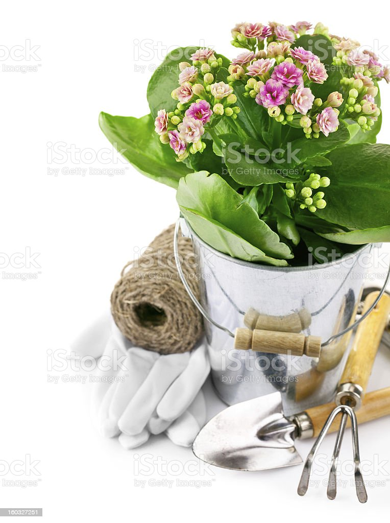 spring flower in bucket with garden tool and gloves royalty-free stock photo