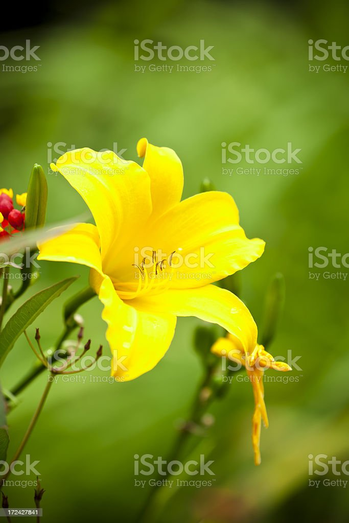 Spring Flower royalty-free stock photo