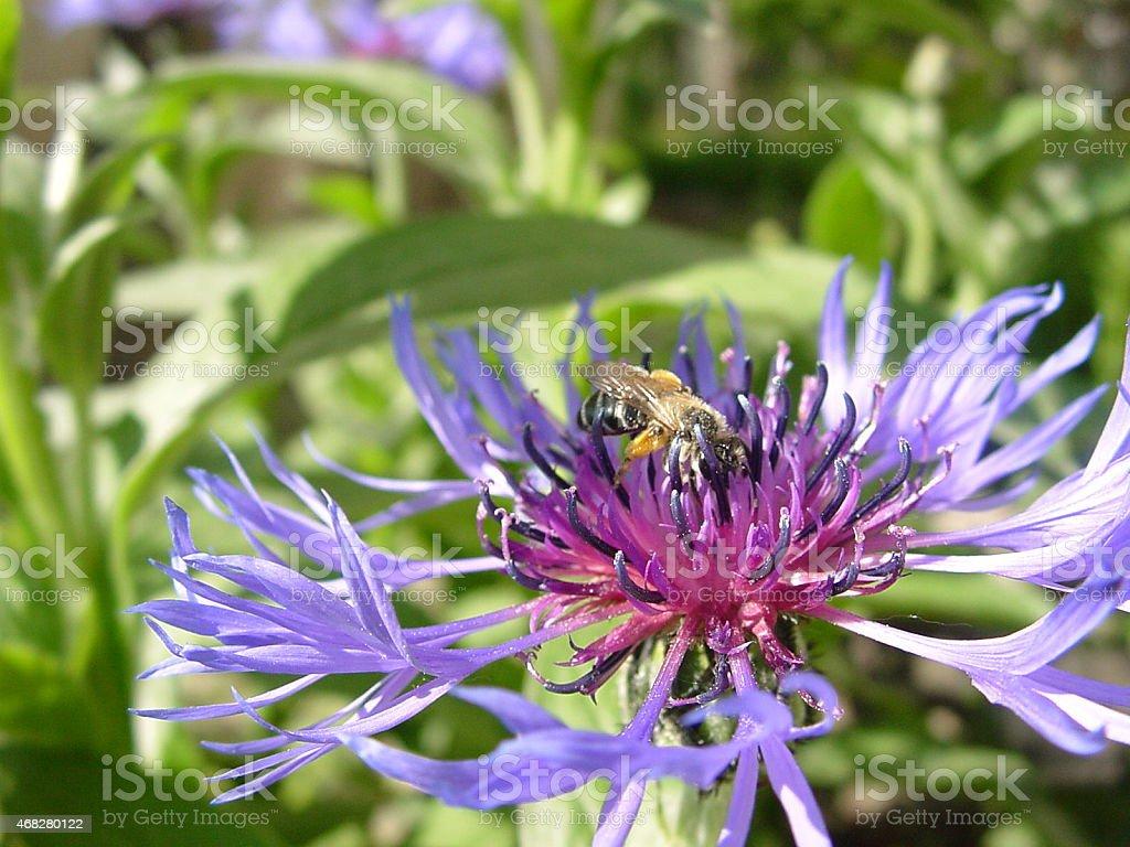 Printemps fleur. photo libre de droits