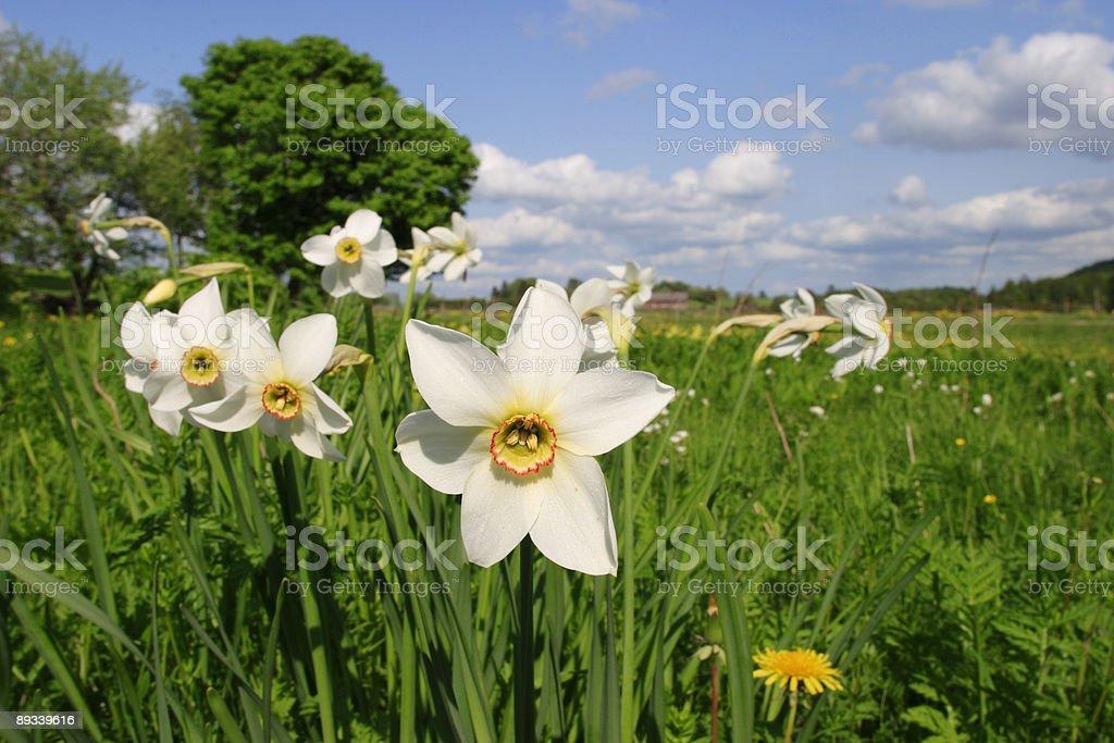 Spring flower. royalty-free stock photo