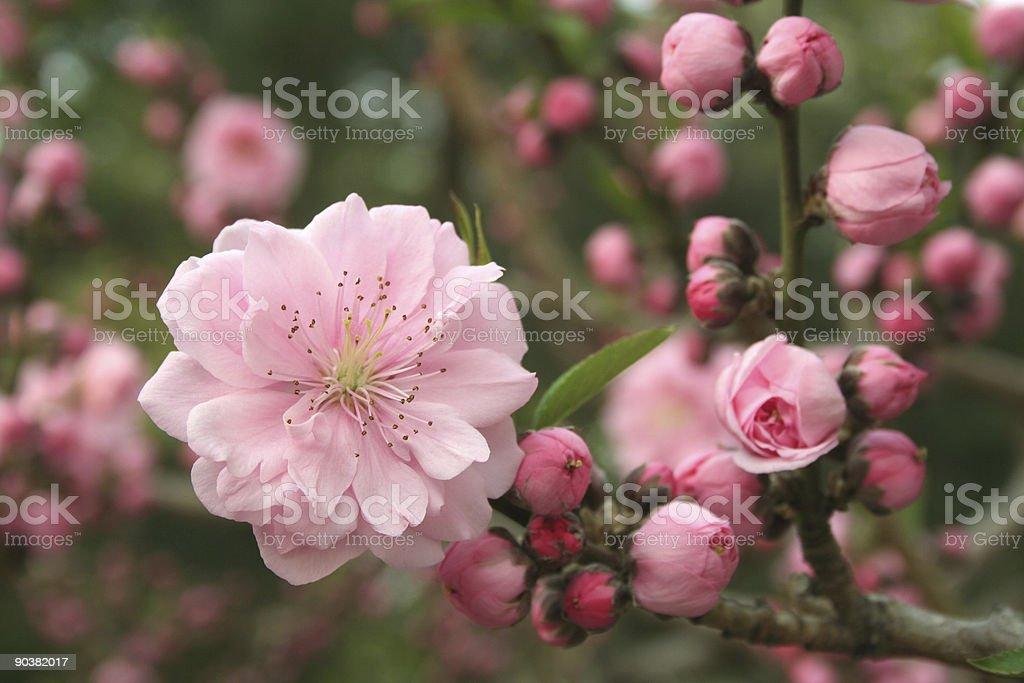 Frühling Blumen-(Serie Lizenzfreies stock-foto
