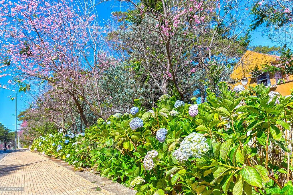 Spring flower road stock photo