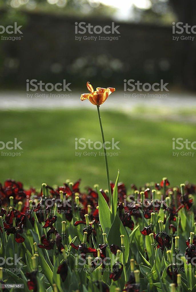 spring flower series stock photo