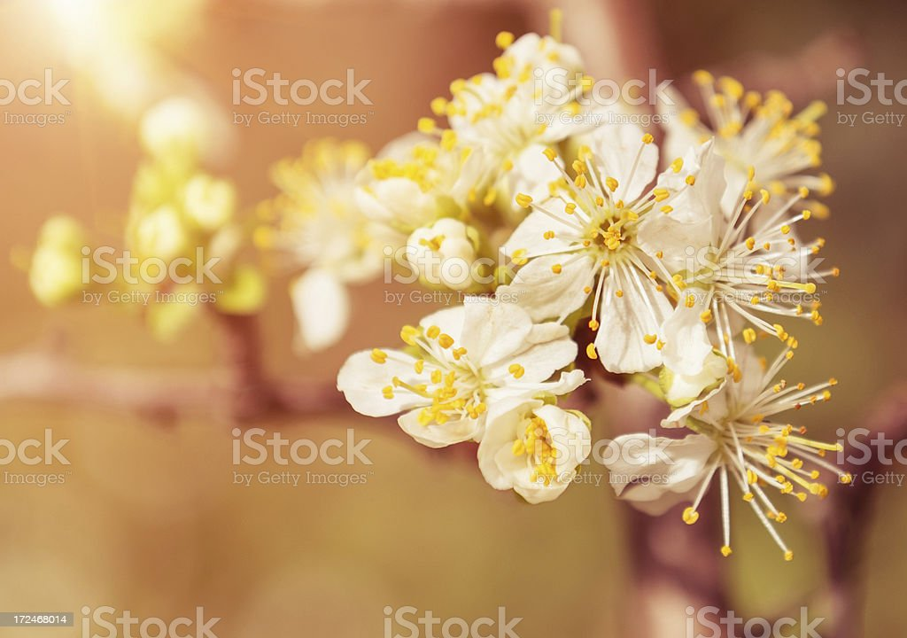 Spring flower with sunlight royalty-free stock photo