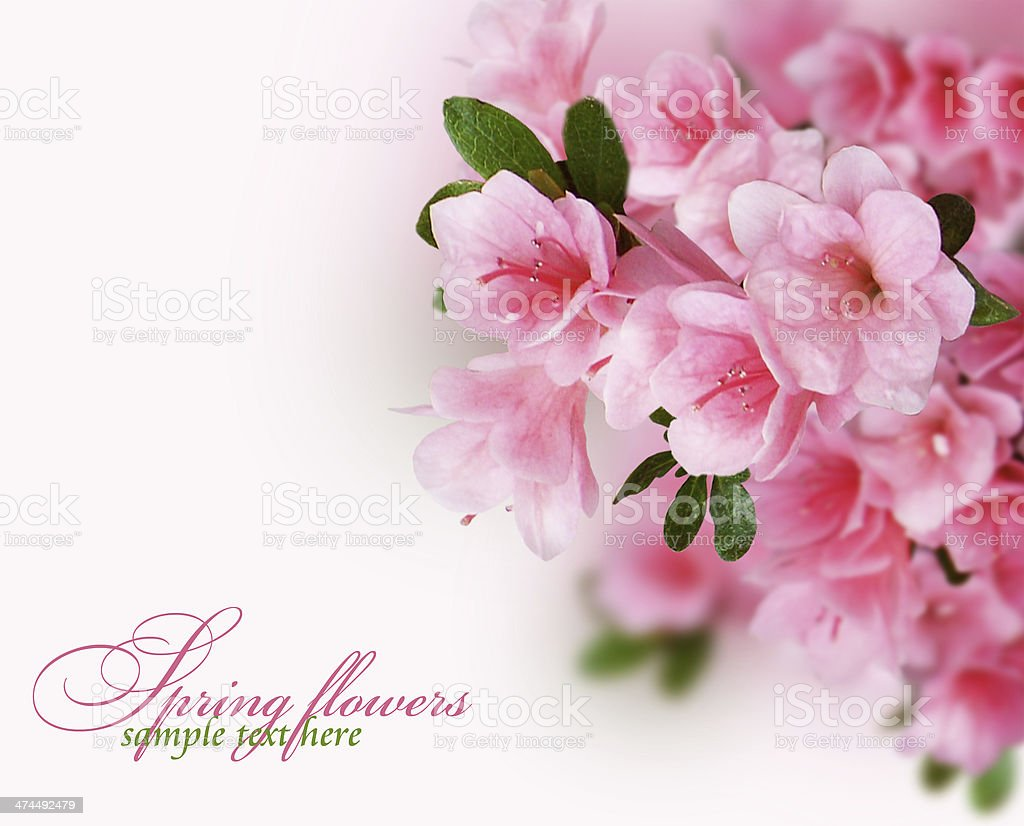 Spring flowering branches stock photo