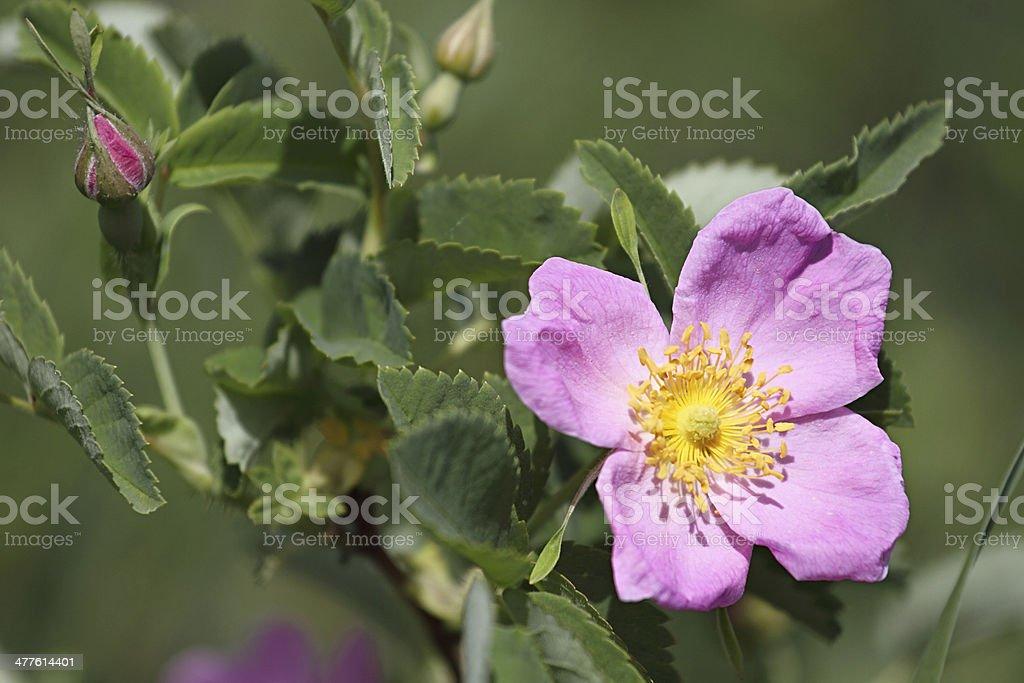 Fleurs de printemps. photo libre de droits