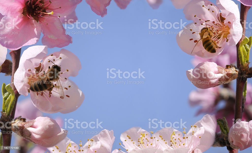 Spring - flowers and bees stock photo