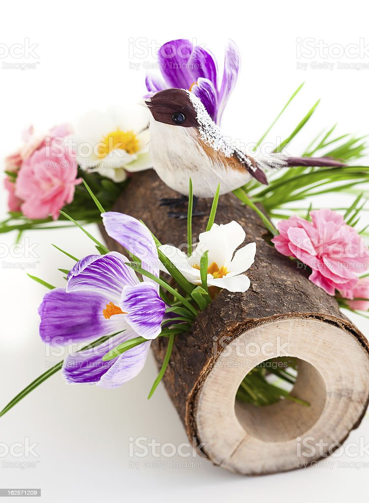spring flowers and bird royalty-free stock photo