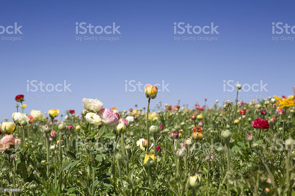 Spring Flowers and Blue Sky royalty-free stock photo