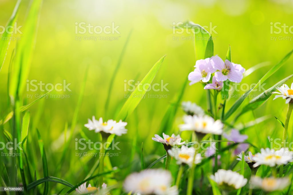 Spring flowers background stock photo