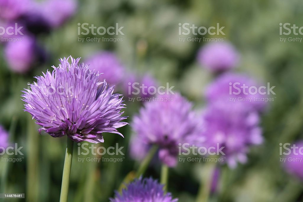 Spring Flowers Blooming in the Garden royalty-free stock photo