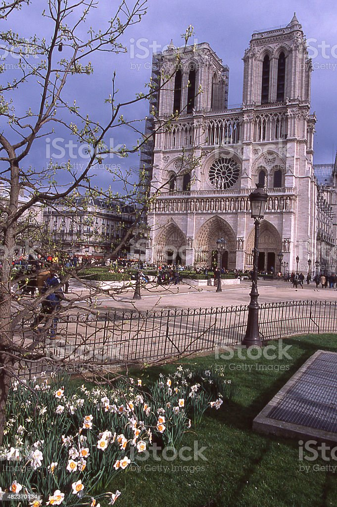Spring flowers Daffodils and courtyard Notre Dame Cathedral Paris France stock photo