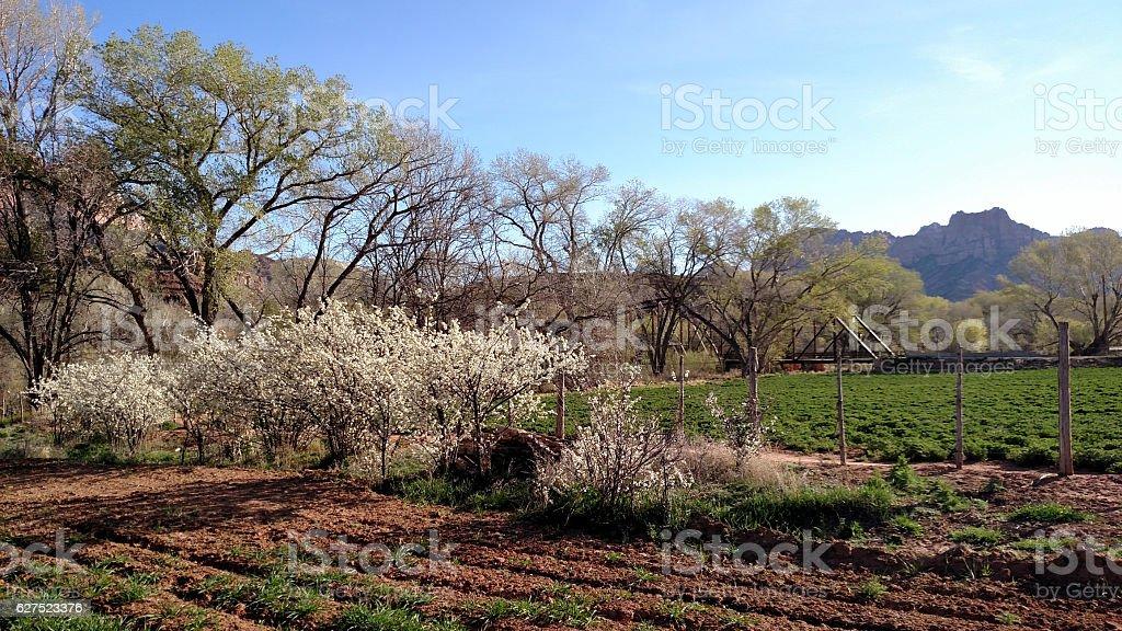 Spring flowers fence alfalfa field near Rockville Historic Bridge Utah stock photo