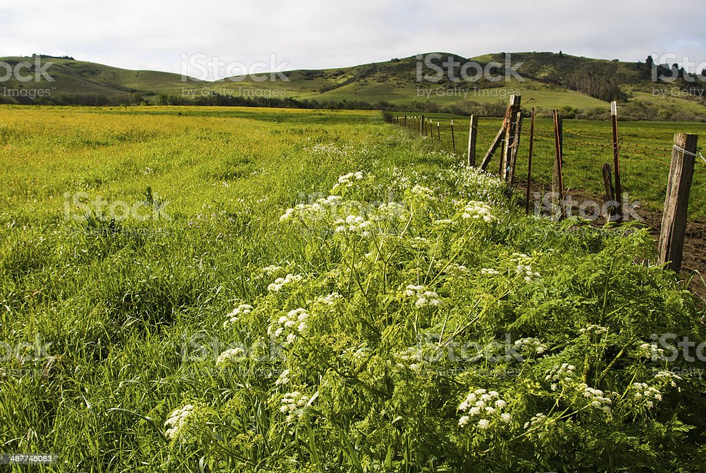 Spring Flowers Fields and Fences Sonoma County California stock photo