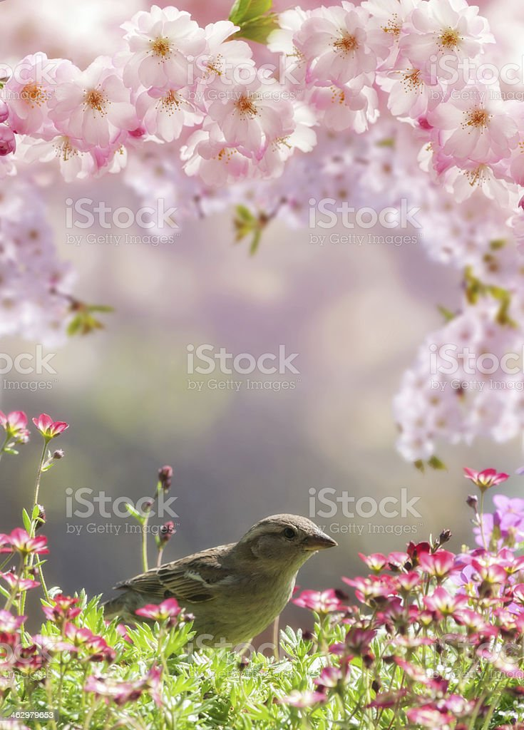 Spring flowers frame with sparrow stock photo
