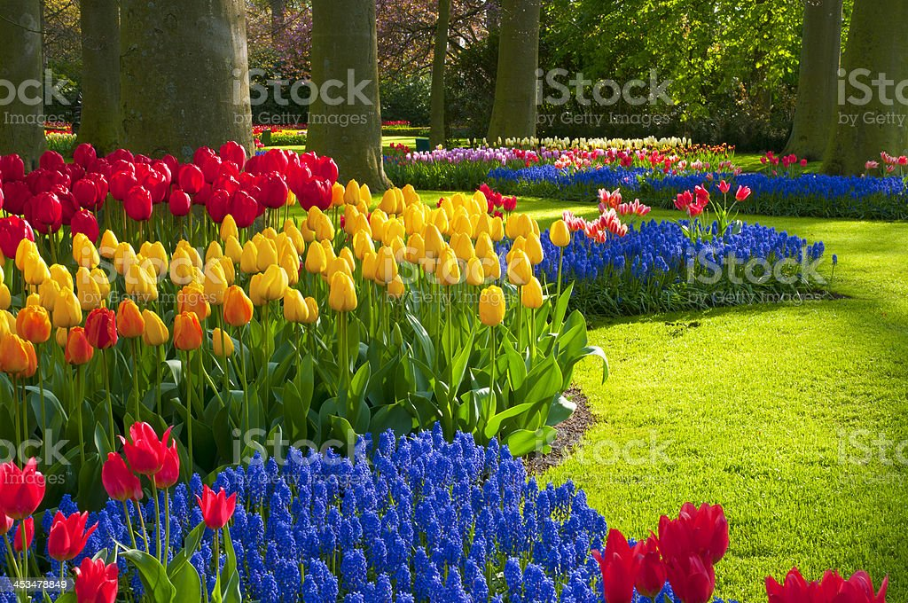 Spring Flowers in a Park stock photo
