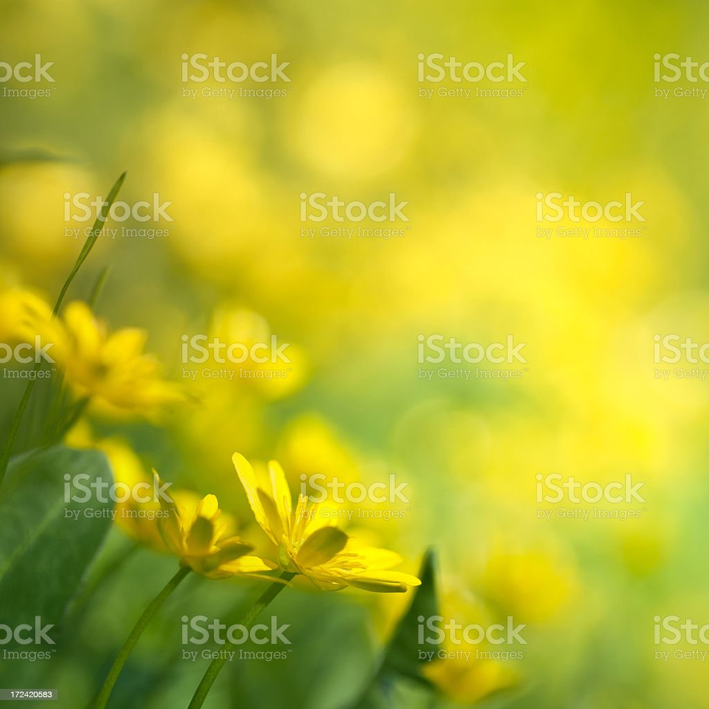 Spring flowers in bloom royalty-free stock photo