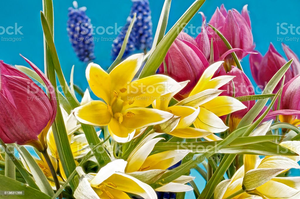 Spring flowers in different colors stock photo