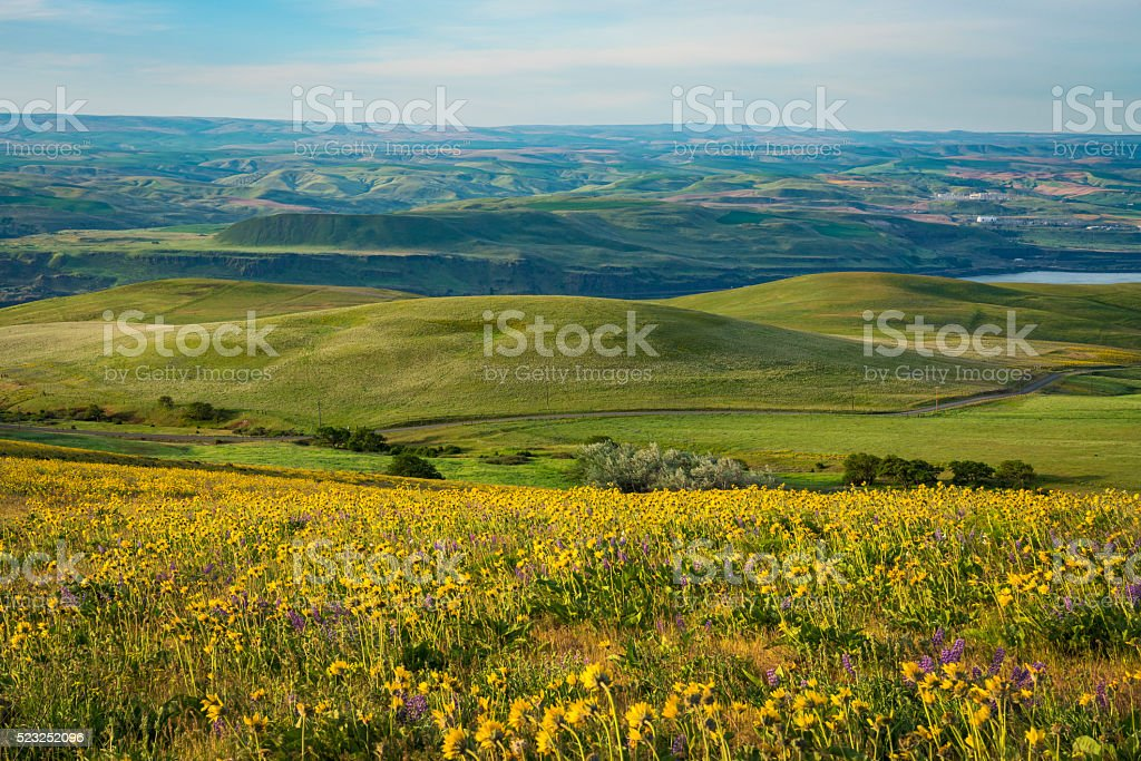 Spring flowers in Eastern Oregon stock photo