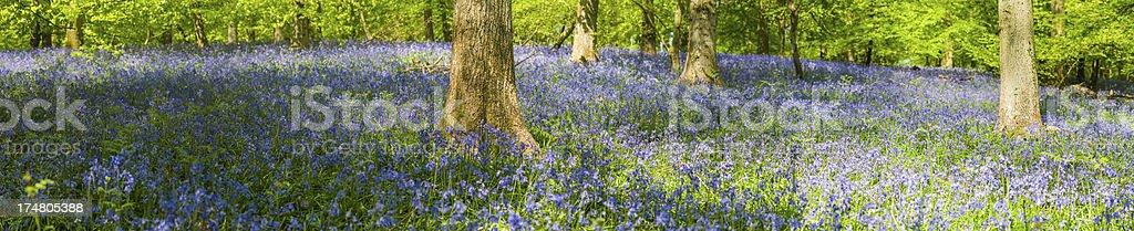 Spring flowers in idyllic wild wood forest panorama royalty-free stock photo